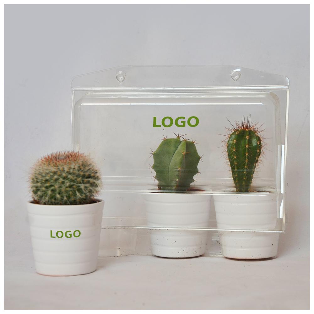 kaktusy w opakowaniu
