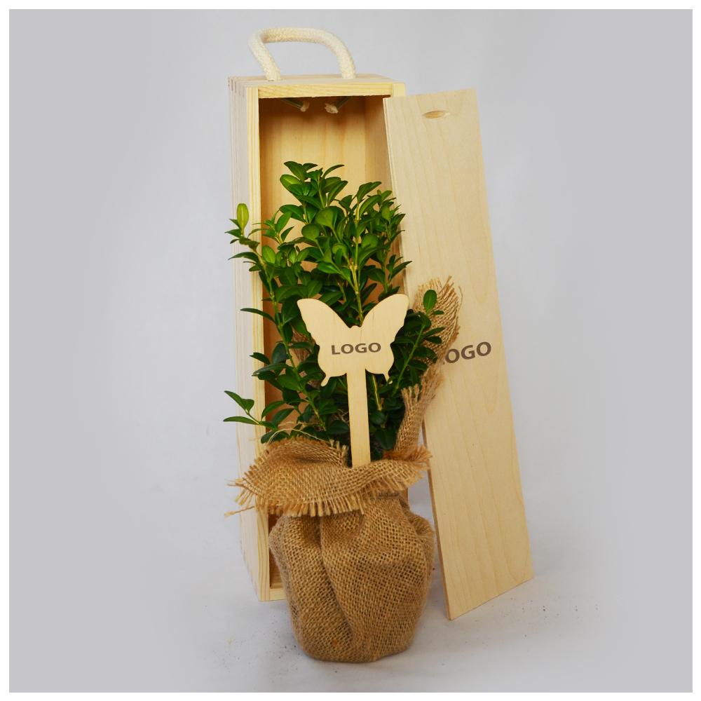 bukszpan wielkanocny w drewnianej skrzyneczce