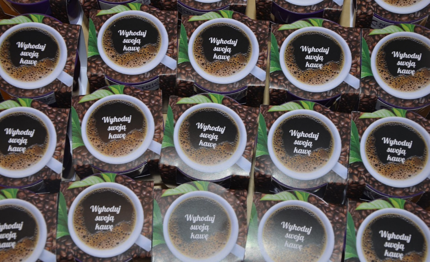 hodowla kawy