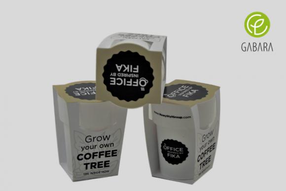 Zestaw do uprawy kawy