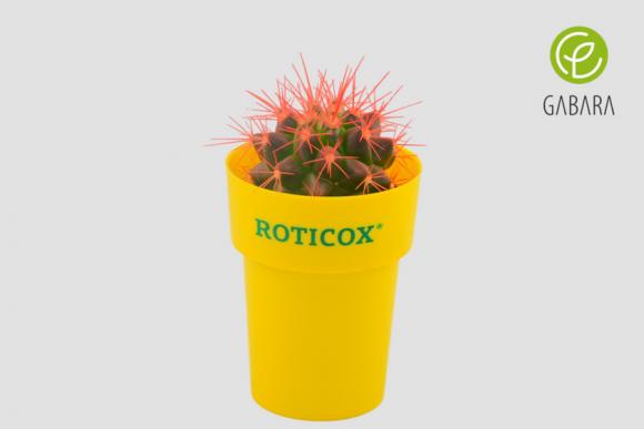 Kaktusy reklamowe