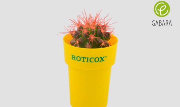 Promotional cactuses